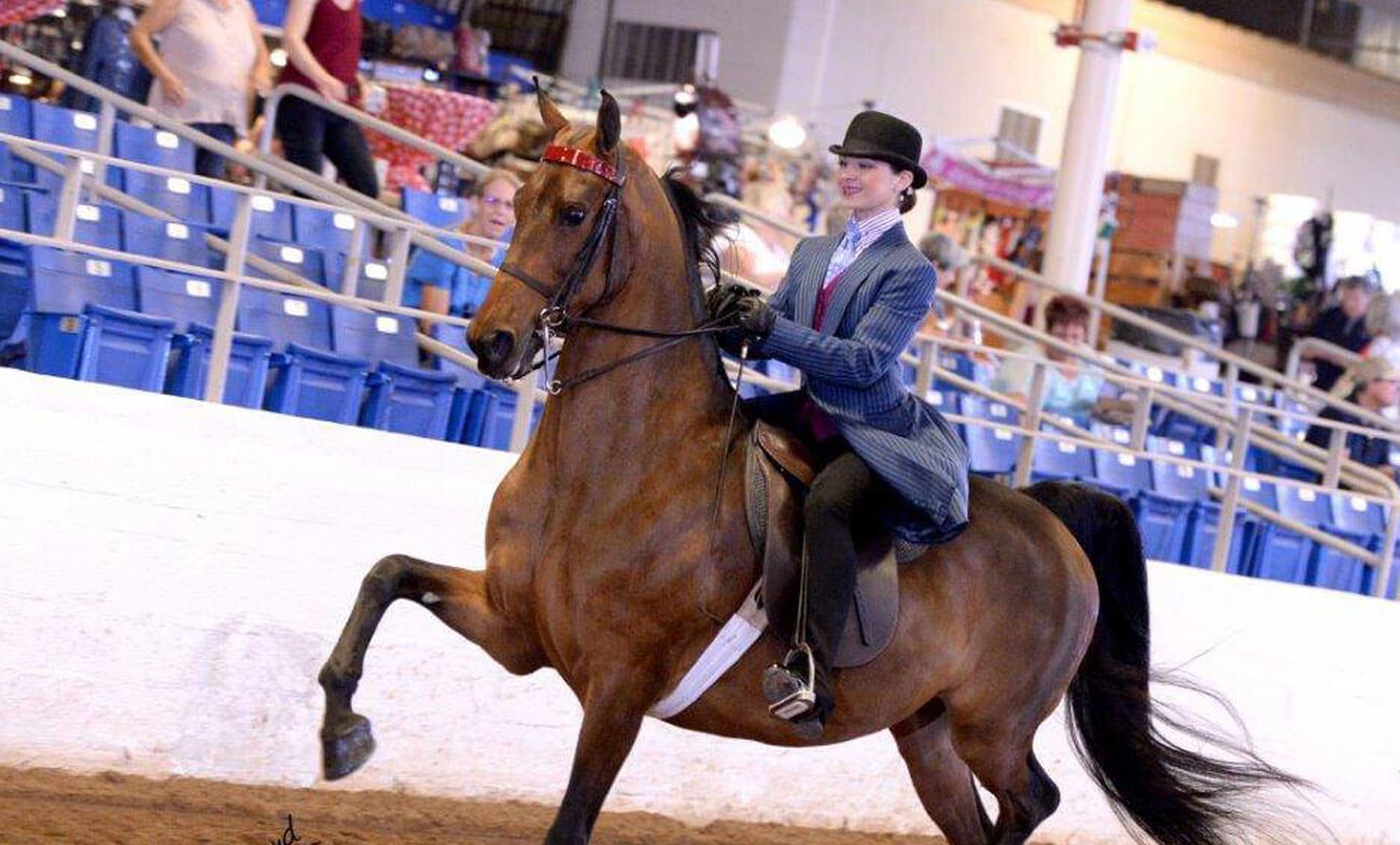 Horseback Riding Lessons in North Scottsdale Horses For Sale Desert Palms