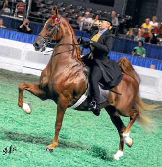 Michelle McVey Haisch Riding