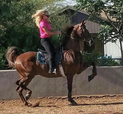 Show Horse Training Desert Palms